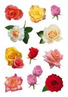 Stickers - Decor roser