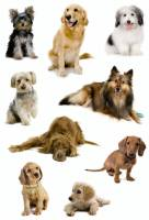 Stickers - Decor hunde