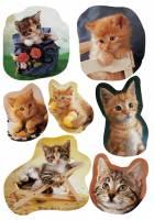 Stickers - Decor katteunger