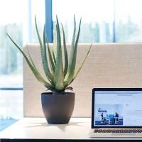 Naturtro kunstig plante Aloe Vera inkl. sort krukke